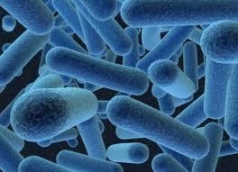 peneyebab penyakit sipilis